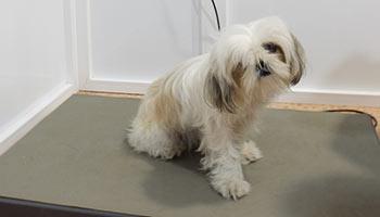 Consulta veterinaria en Alicante