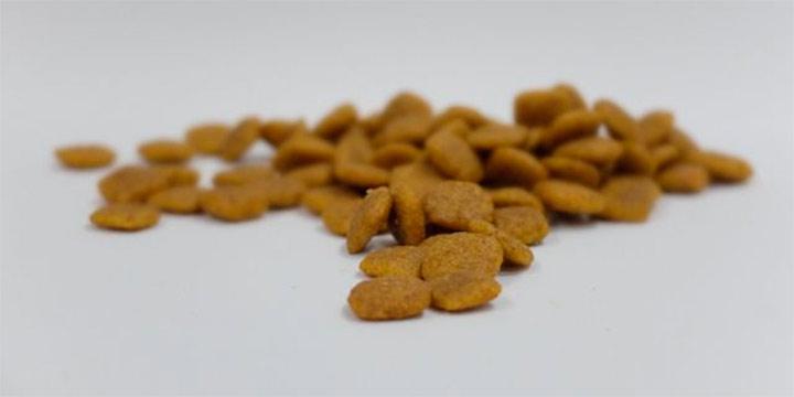 La importancia de la alimentación para mantener a nuestras mascotas sanas