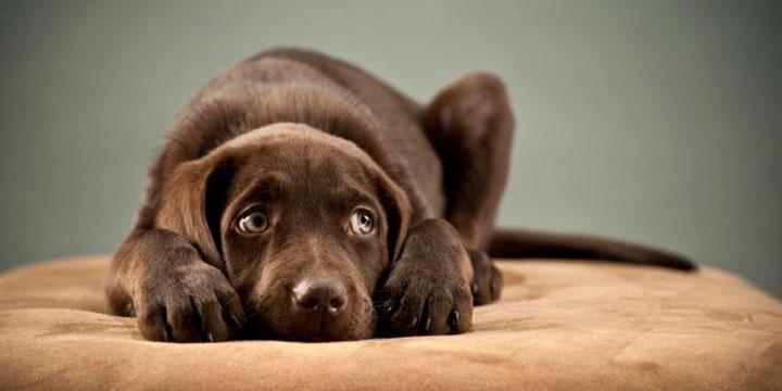 Miedos y fobias de nuestras mascotas